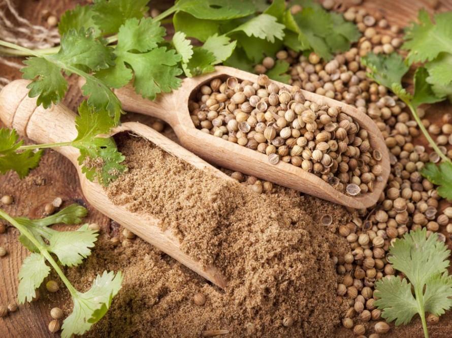 Korijander – biljka koja liječi sve tegobe