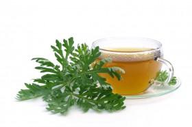 Pelin – biljka snažnog antiparazitnog djelovanja