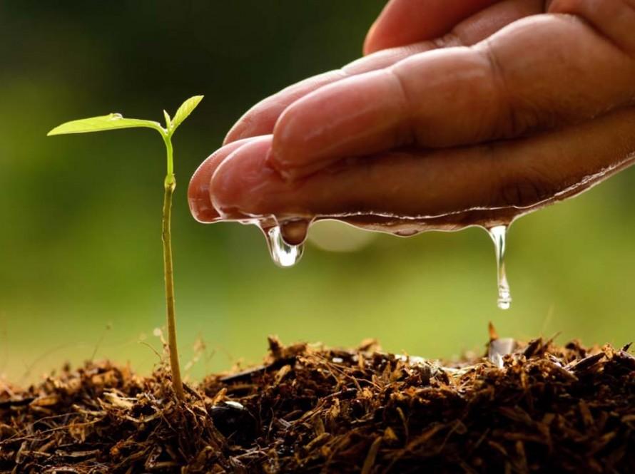 Biološko-dinamička poljoprivreda