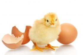 Jaje – simbol savršenstva