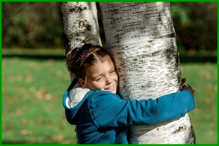 Ljekovito drvo breze