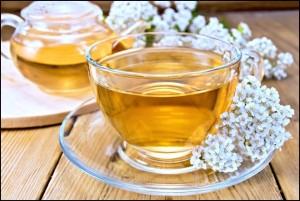 ča od stolisnika