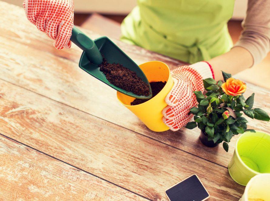 Kako pravilno presaditi cvijeće