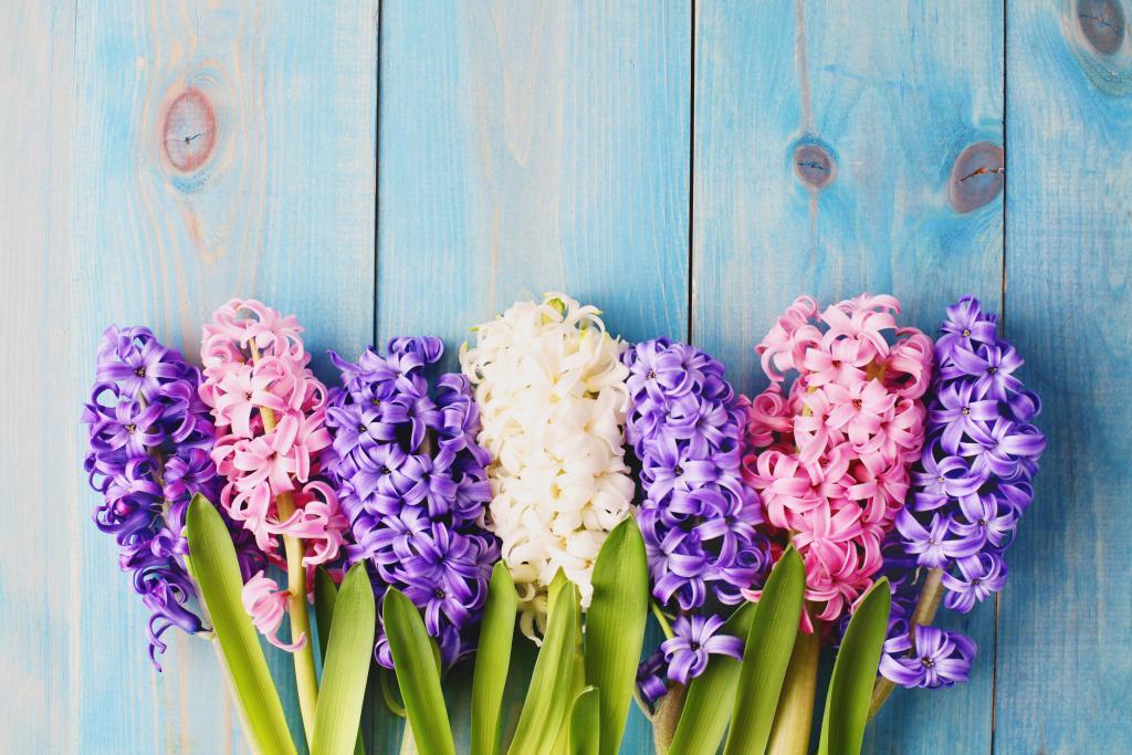 presaditi cvijeće