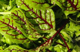 Važnost pravilne prehrane u prevenciji anemije