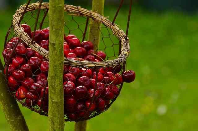 Trešnje – najslađi izvor vitamina C, vlakana i antioksidansa