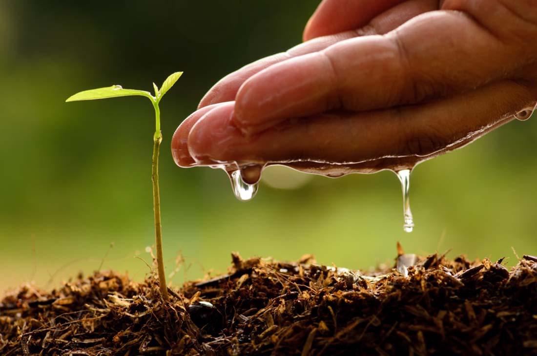 Bakini savjeti Biološko dinamična poljoprivreda