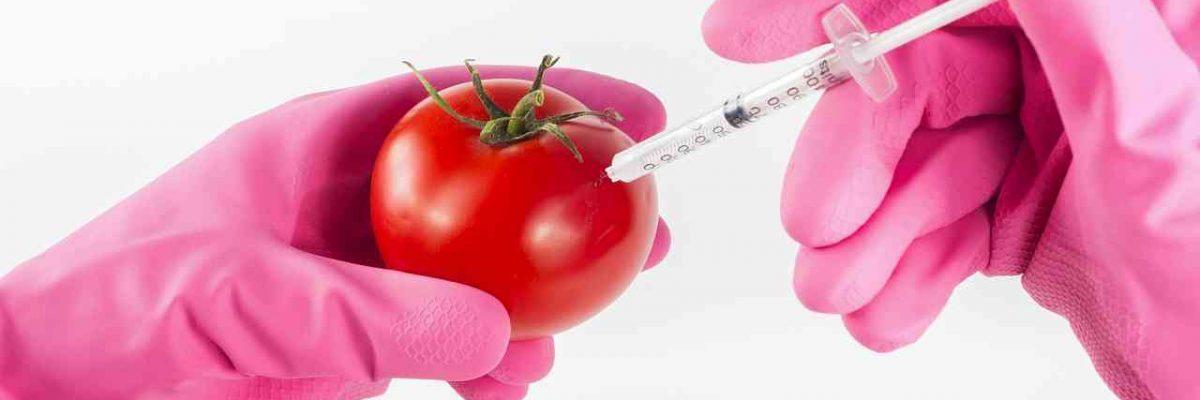 GM (genetski modificirana) hrana