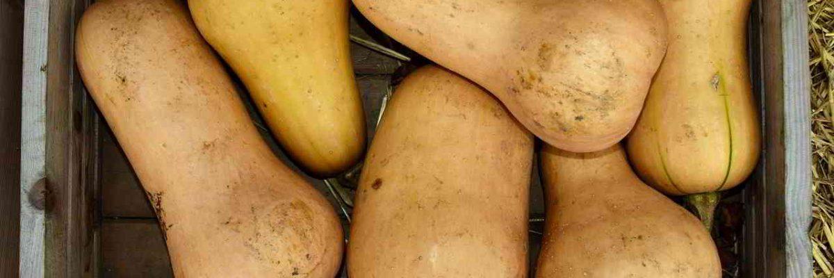 8 sjajnih zdravstvenih prednosti butternut tikve